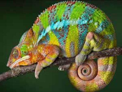 s_reptile